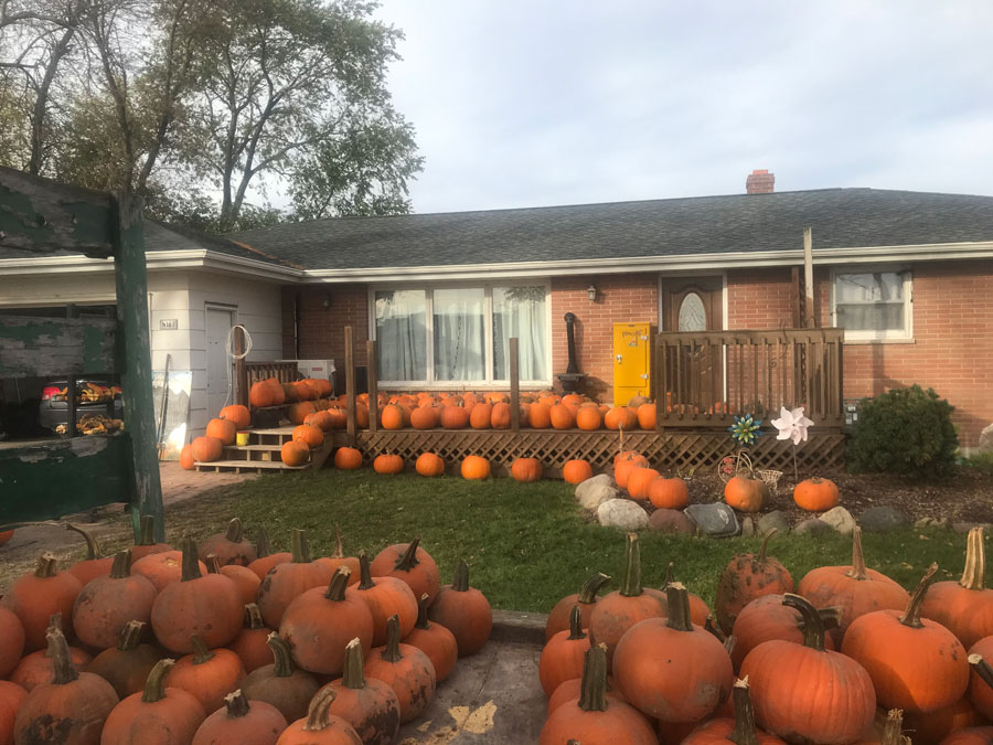 TODAY – Peter's Pumpkin Patch – October 2020